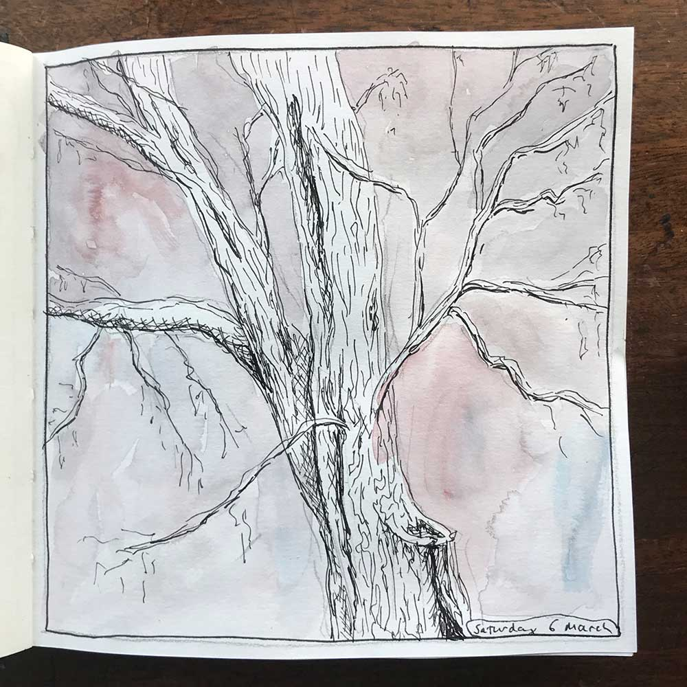 sketchbook day 6 - local tree