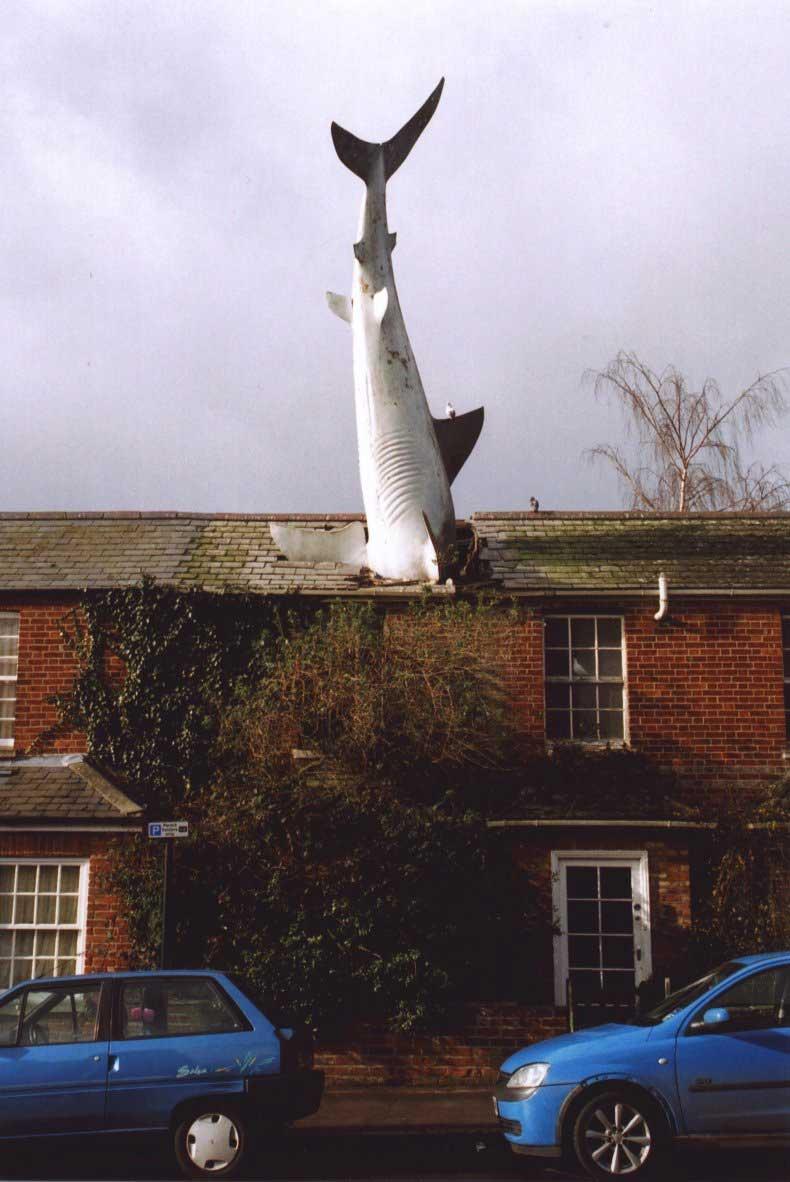 shark house oxford